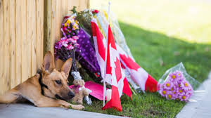 Nathan Cirillo's dog